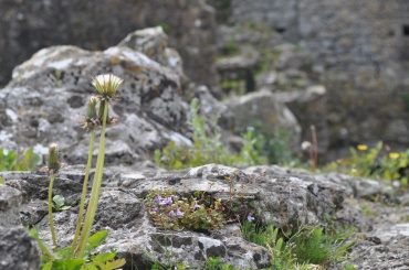 Weeds escaping ruins